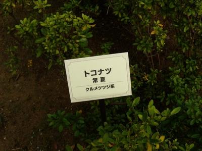 Mini_tokonatu